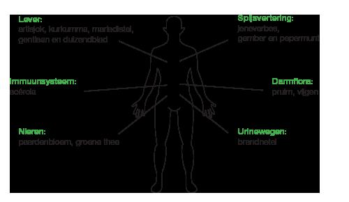 Salus detox lichaam